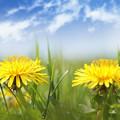 写真: 春の誘い( ^ω^)・・・