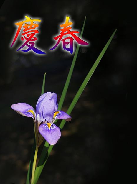 慶春・・www