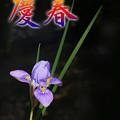 写真: 慶春・・www