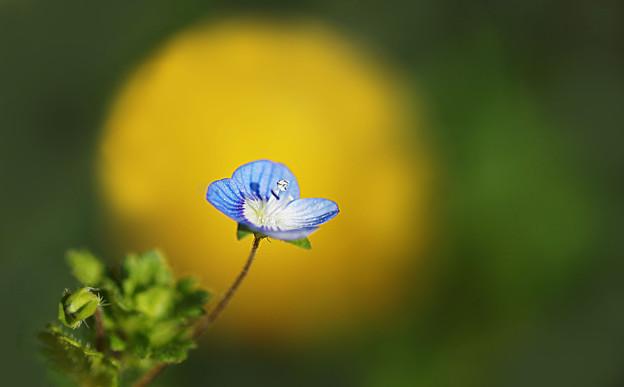 春の使者( ^ω^)・・・