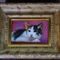 写真: 愛猫ミチル