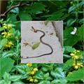 写真: 蛇ちゃん