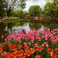 写真: 水辺の花