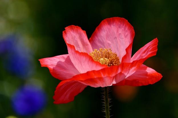 写真: 美しく咲いた私を見て