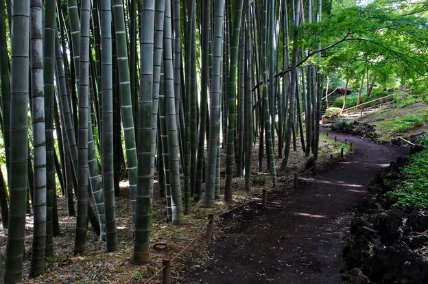 Photos: 竹の小路