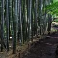 写真: 竹の小路