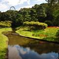 写真: 小石川後楽園の彼岸花