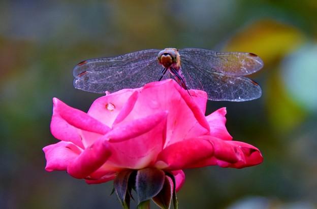 Photos: 秘密の花園にて