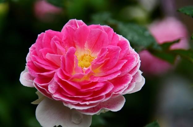 Photos: 秘密の花園にて2