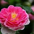 写真: 秘密の花園にて2