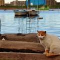 江戸川の猫