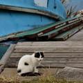Photos: 江戸川の猫(2)