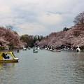 Photos: 井の頭公園にて