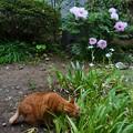 Photos: 草食猫