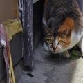 Photos: ゴキブリと猫