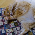 Photos: お昼寝マットの上で(2)