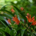 Photos: 殿ヶ谷戸庭園の狐ちゃん