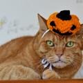 かぼちゃハットを被った福嗣