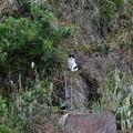Photos: 崖の上の猫