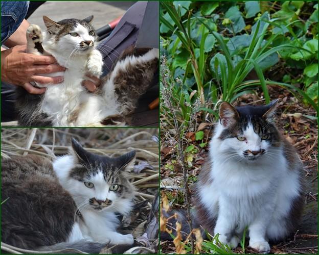 Photos: 猫の今昔物語