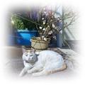 梅とお公家猫
