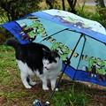 Photos: ちょっと雨宿り