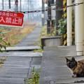Photos: 駅猫