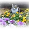 Photos: 花に囲まれて