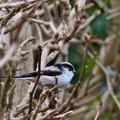 Photos: 幸せの小鳥