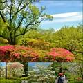 Photos: 新緑の仙台
