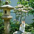 Photos: カルミアの花