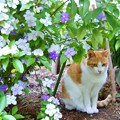 Photos: ニオイバンマツリの花の下で
