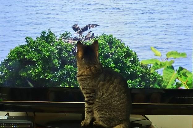 Photos: 猫の集中力