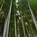 Photos: 竹取物語