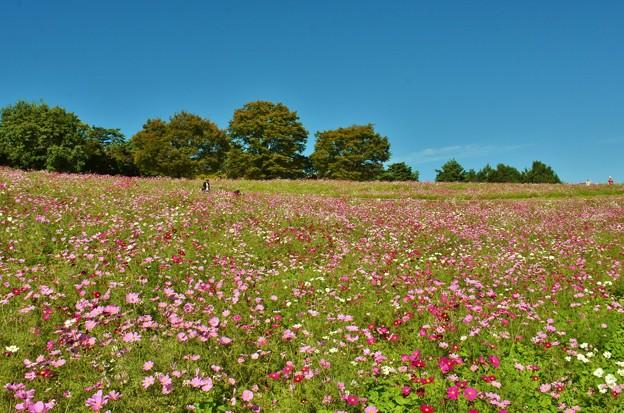 花の丘にて