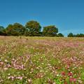 Photos: 花の丘にて