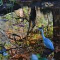 Photos: 初冬の井の頭池