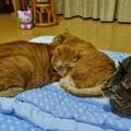 Photos: 猫・猫・猫・=^_^=