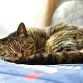 Photos: 眠り姫