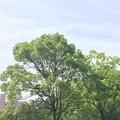 千里南公園