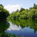 写真: 雲場池/軽井沢