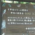 写真: 野鳥の森
