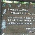 Photos: 野鳥の森