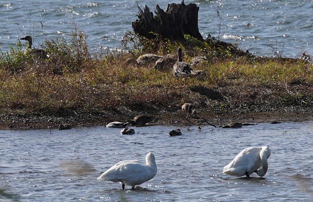 湖北野鳥センター前(滋賀県)