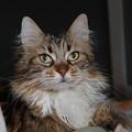 Photos: 猫さん