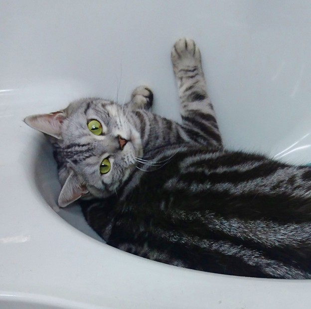 洗面台が好きやねん