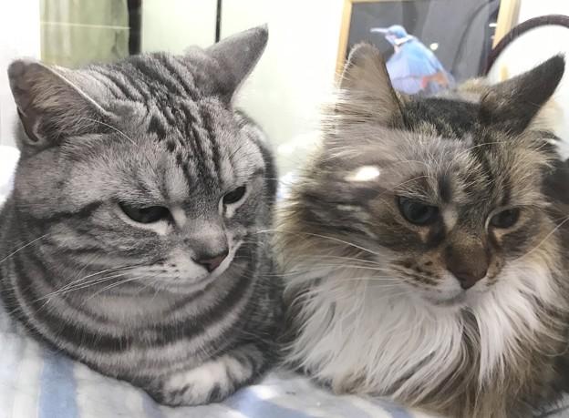 「共視」viewing together