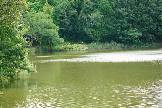 高町池(大阪・山田西公園)