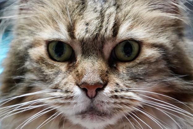猫さま、、、、