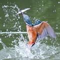 お魚ゲット!